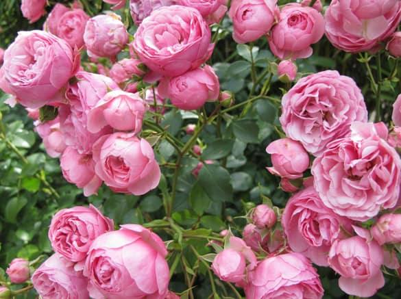 rosen2012