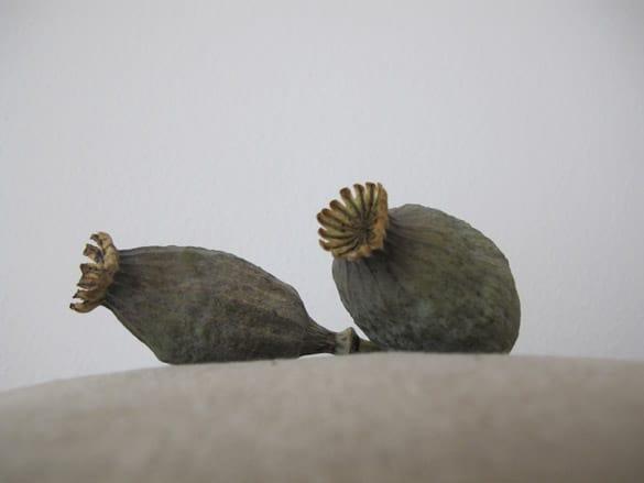 mohnkapseln-sophia-wagner