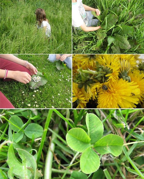 pflanzenfarben-herstellen