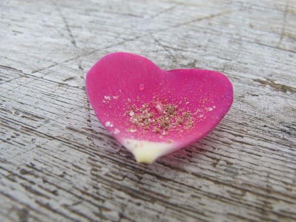 herzbluete-rose